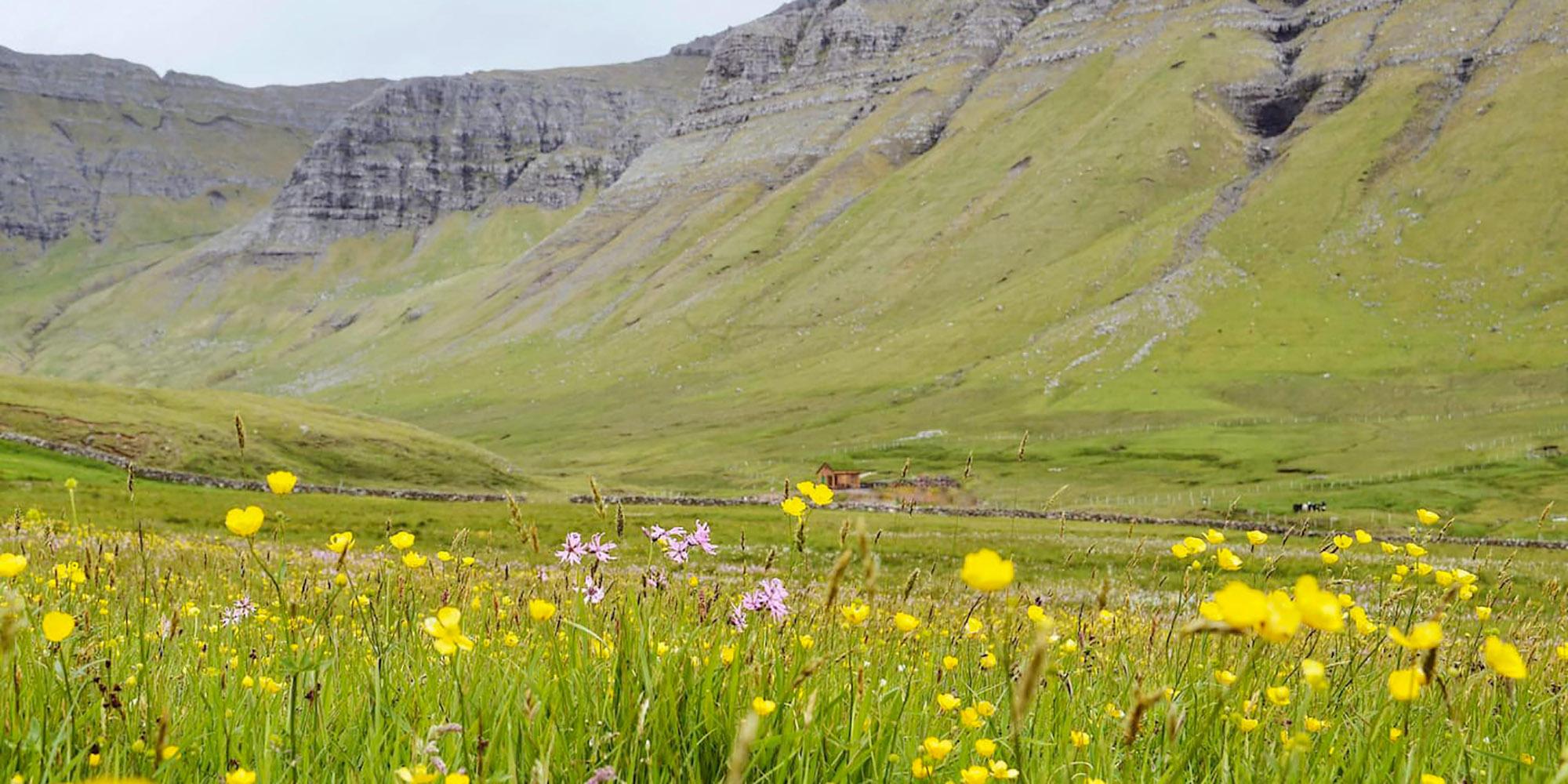 Discove the Faroe Islands: green fields