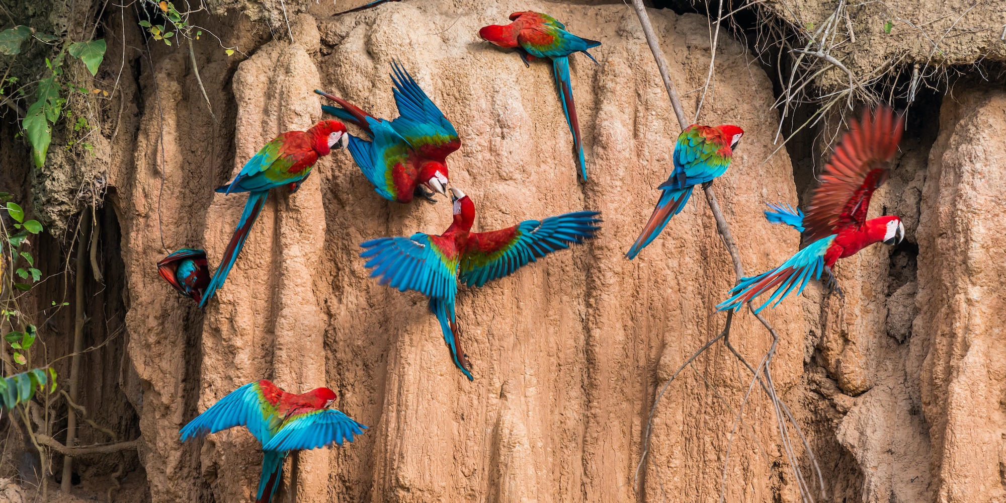 Peru travel guide: Amazon Jungle wildlife parrot