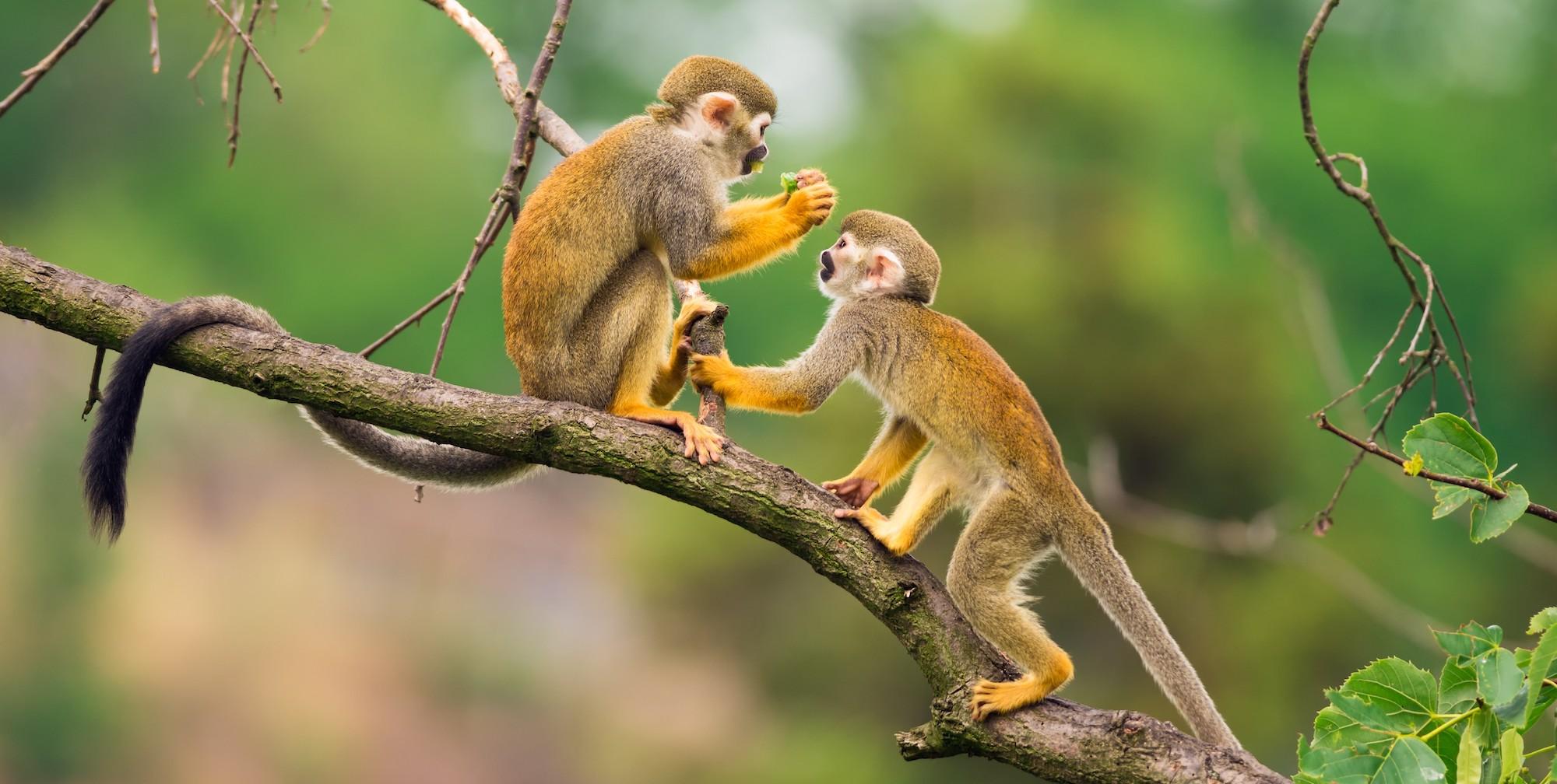 Peru travel guide: Amazon Jungle wildlife detail