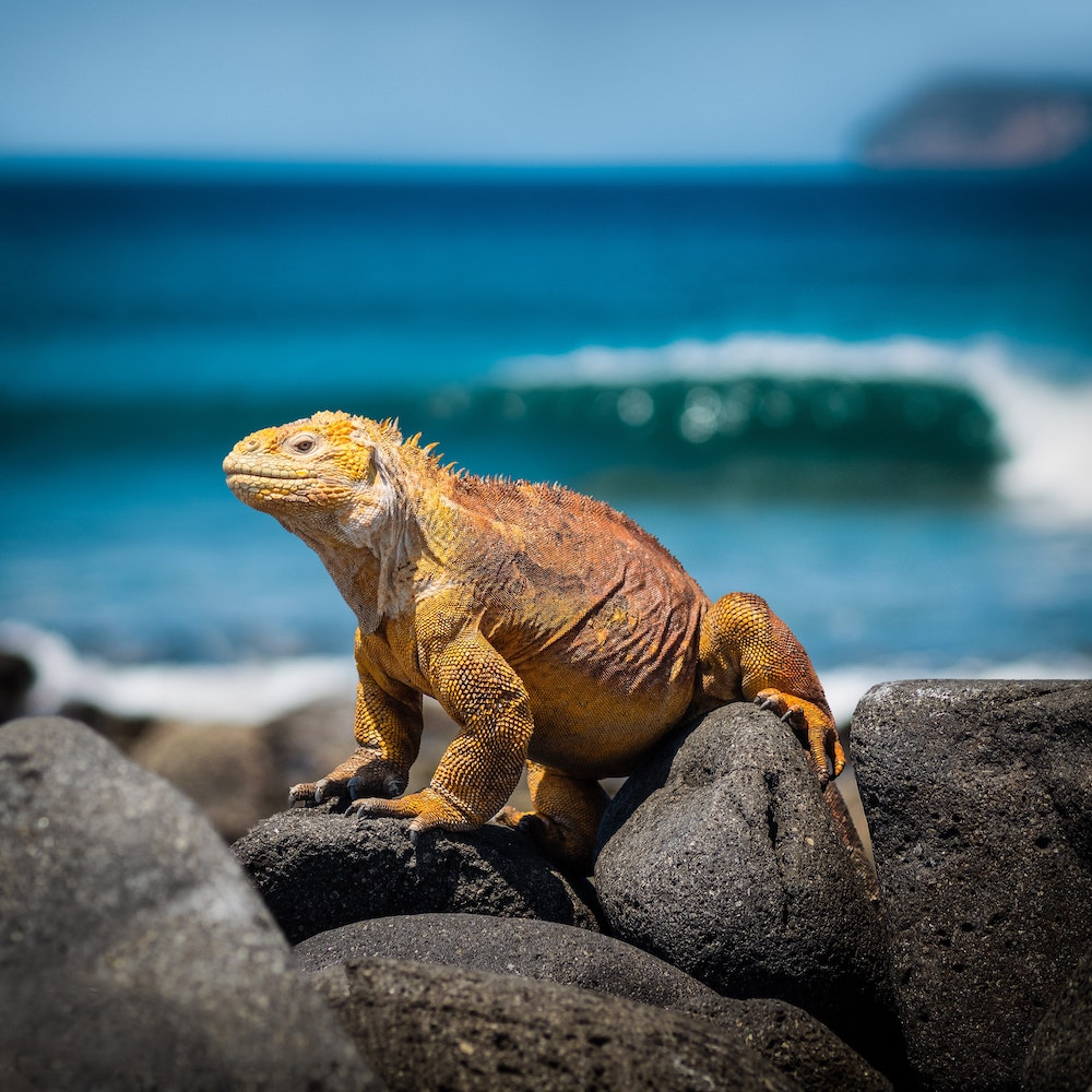 Visit Peru: Galapagos wildlife